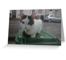 Kitty Cat, Pretty Cat. Greeting Card
