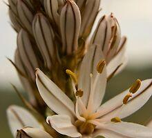 Spanish flower bloom by Stephen Knowles
