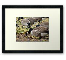 Natural Buffet Framed Print