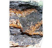 Veins of Gold,..Pine Bark Poster