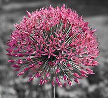 Pink Flower by cinema4design