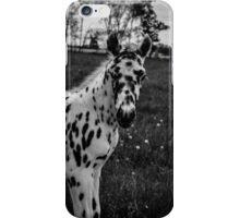 Leopard Appaloosa Foal  iPhone Case/Skin