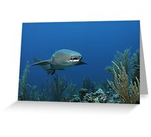 Reef Cruiser Greeting Card