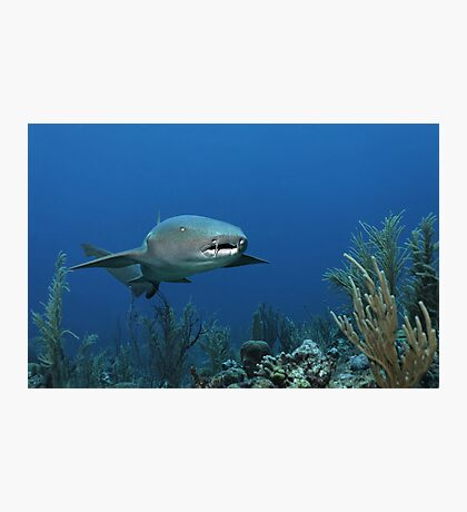 Reef Cruiser Photographic Print