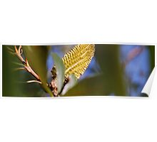 yellow bottle brush Poster