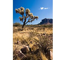 superstition mountains Photographic Print