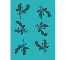 Flying DragonFly Photographic Print