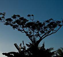 Night tree by Karel Kuran