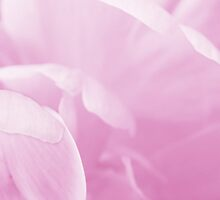 Peony Petals by Laurie Minor