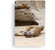 Tiger Lie Canvas Print