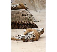 Tiger Lie Photographic Print