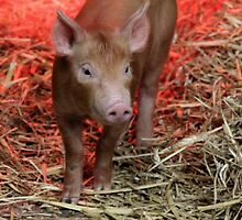This Little Piggy by Ladymoose