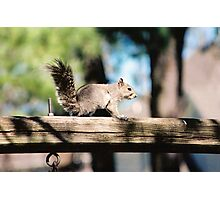 Mr. squirell Photographic Print