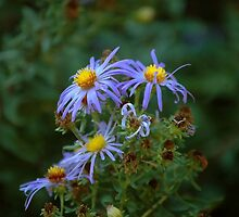 Blue Flowers by Laura1957