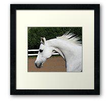 Arabian Arch Horse Portrait Framed Print