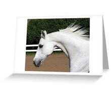 Arabian Arch Horse Portrait Greeting Card