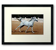 Arabian Joy Horse Portrait Framed Print