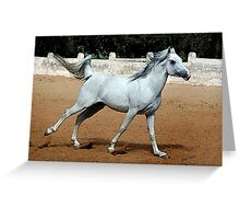 Arabian Joy Horse Portrait Greeting Card
