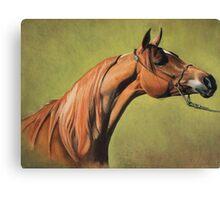 Arabian Horse Portrait Canvas Print