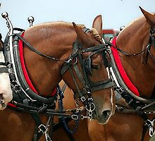 Belgian Draft Horse Group Portrait by Oldetimemercan