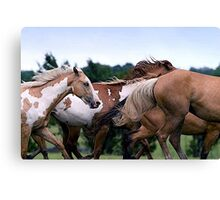 Camouflage Paint Horse Portrait Canvas Print