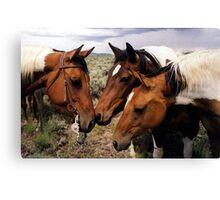 Conversation Paint Horse Portrait Canvas Print