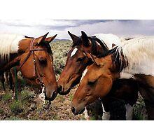 Conversation Paint Horse Portrait Photographic Print