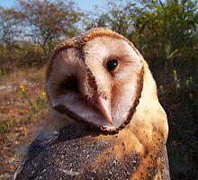 Barn Owl by Dandelion Dilluvio