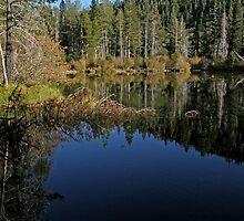 Sand Pond 2 ~ Sierra City, California by Patty Boyte