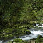 Riwaka River, Tasman bay, New Zealand by Paul Mercer