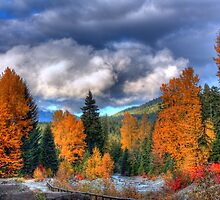 Fall colors  by James Duffin