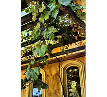 Shenandoah Valley Winery Photographic Print