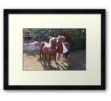 Wild Feral Horses-Playful Pals Framed Print