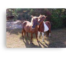 Wild Feral Horses-Playful Pals Canvas Print