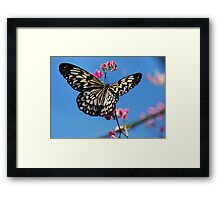 Paper Kite  Framed Print