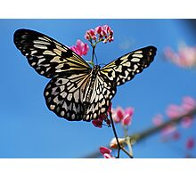 Paper Kite  Photographic Print