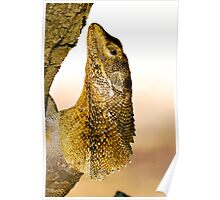 ''Frill Necked Lizard'' Poster