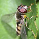 Hover Fly by Michael Walker