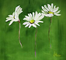 Daisy, Daisy, Daisy by Angela  Burman