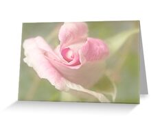 First rose of spring Greeting Card
