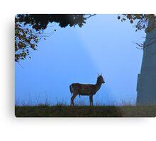 Fallow Deer #1 Metal Print