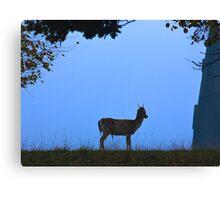Fallow Deer #1 Canvas Print