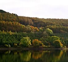 Autumn Colours  by willJohnson
