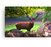 Stag #1   (Red Deer) Canvas Print