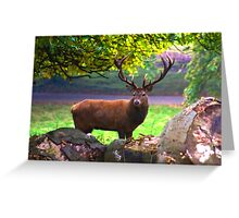 Stag #1   (Red Deer) Greeting Card