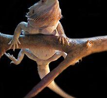 I am......Ninja Lizard by kaotic-shell