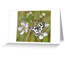 Marbled White Greeting Card