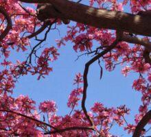 Pink Blossoms, Tabebuia Tree Sticker