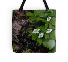 Birch and Dogwood - Lake Superior Provincial Park Tote Bag