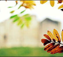 Leaf~framed Tower by Steven Parker